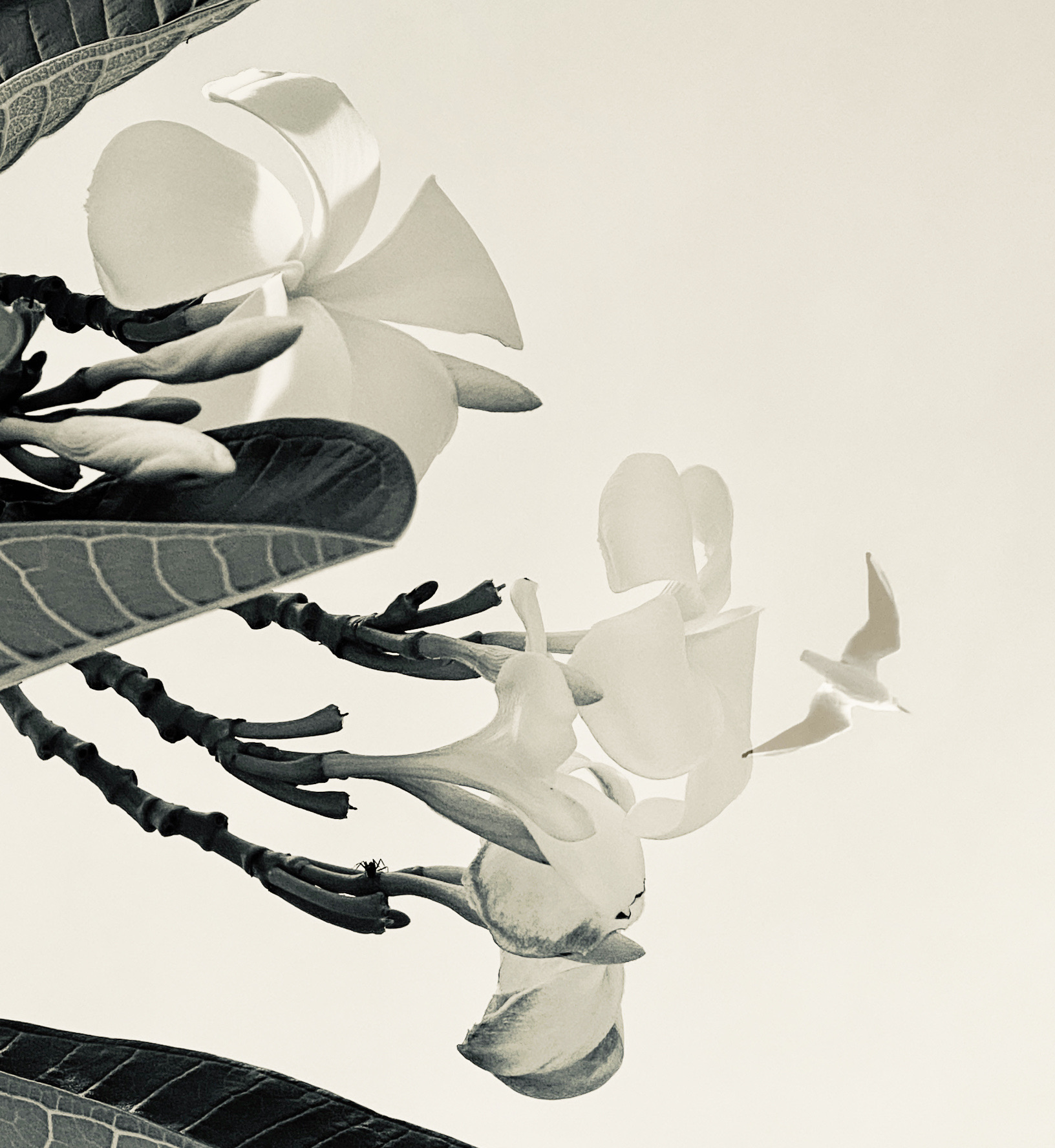 flowersfly