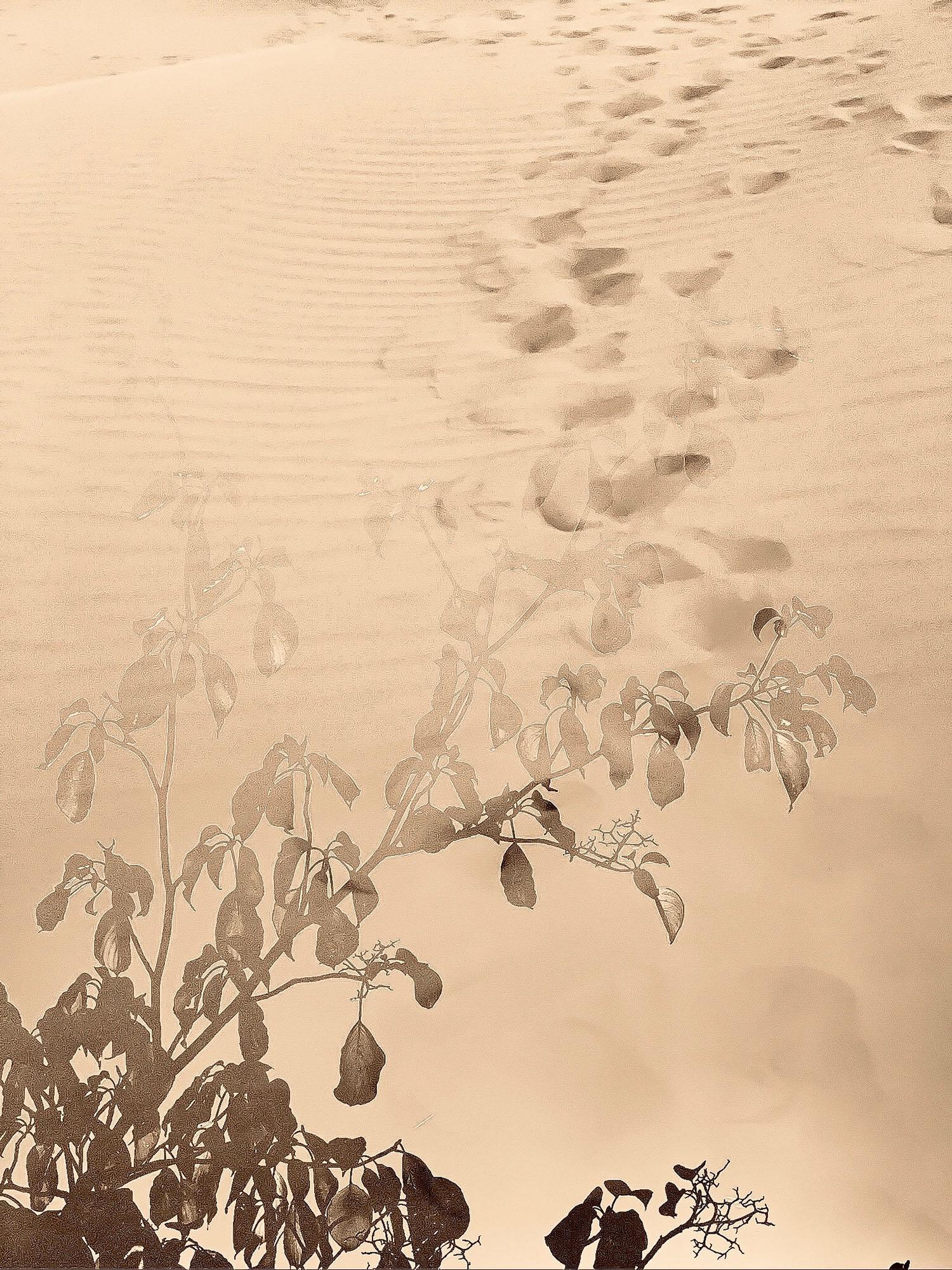 xiansera migrating 2 free